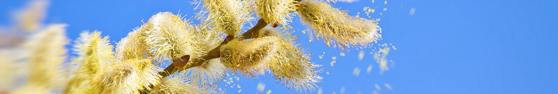 capteur de pollens